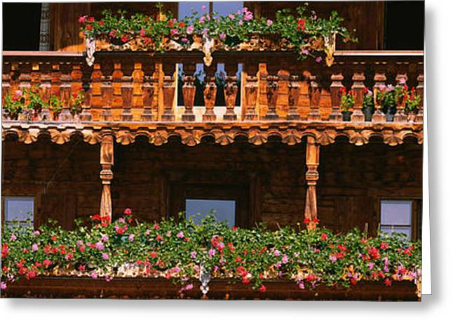 Bannister Greeting Cards - Close-up Of Potted Plants On Balcony Greeting Card by Panoramic Images
