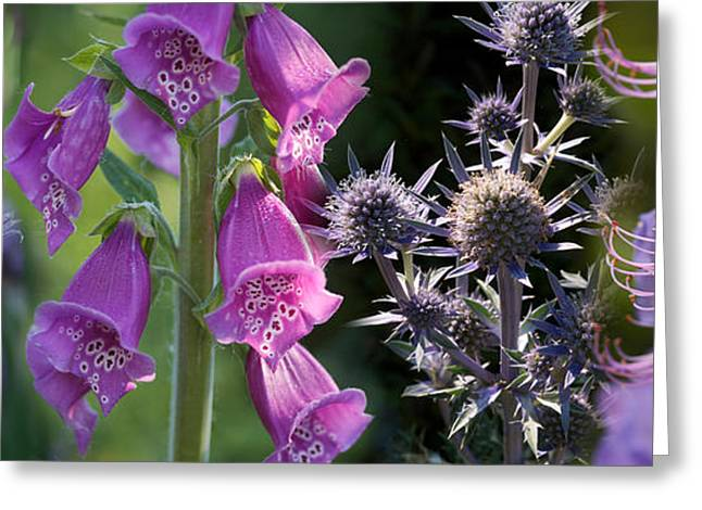 Purple Flower Flower Image Greeting Cards - Close-up Of Purple Flowers Greeting Card by Panoramic Images