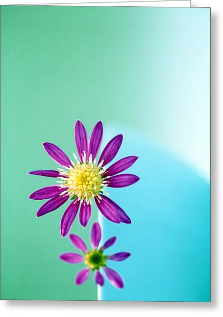 Wildflower Photography Greeting Cards - Close Up Of Purple Flowers With Yellow Greeting Card by Panoramic Images