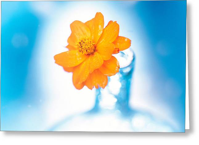Marigold Greeting Cards - Close Up Of Ruffled Marigold Bloom Greeting Card by Panoramic Images
