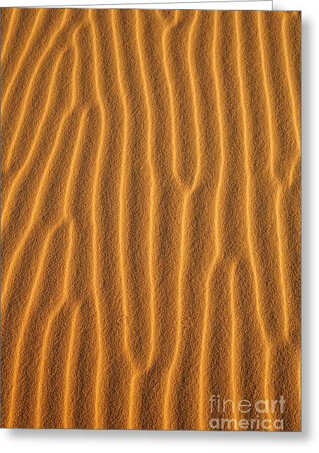 Sand Patterns Greeting Cards - Close up of sand dune in the Sahara Desert Greeting Card by Robert Preston