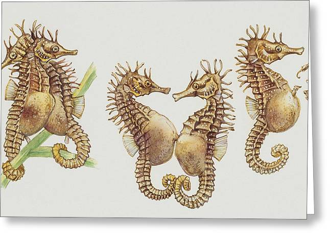 Fish Drawings Greeting Cards - Close-up of sea horses Greeting Card by English School