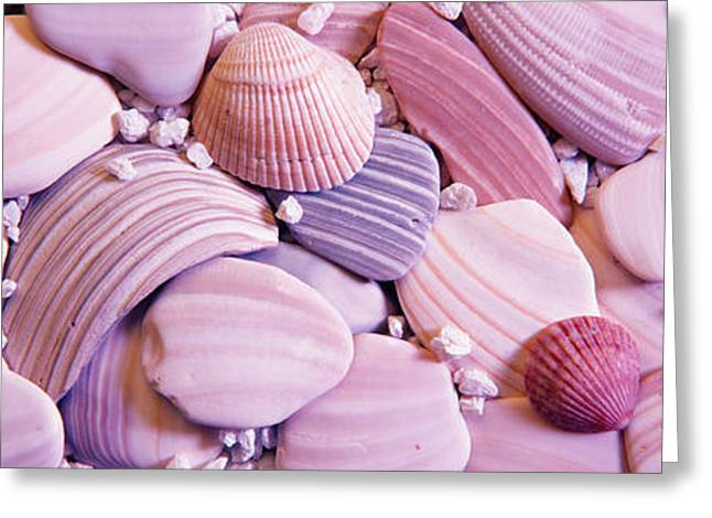 Seashell Photography Greeting Cards - Close-up Of Seashells Greeting Card by Panoramic Images