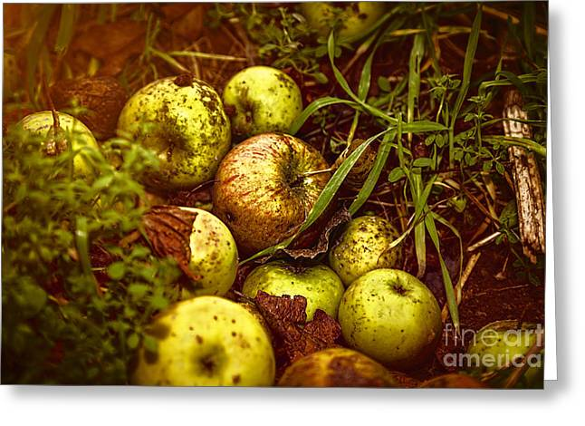 Wild Orchards Greeting Cards - Close Up Of Some Windfalls Apples Laying In The Dirt Greeting Card by Armin Staudt