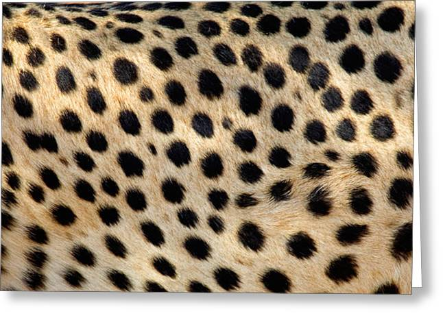 Close-up Of Cat Greeting Cards - Close-up Of The Spots On A Cheetah Greeting Card by Panoramic Images