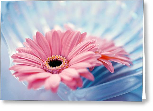 Rippled Water Greeting Cards - Close Up Of Two Pink Gerbera Daisies Greeting Card by Panoramic Images