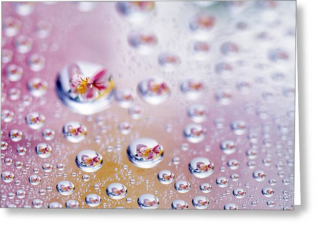 Microcosm Greeting Cards - Close Up Of Water Droplets With Flower Greeting Card by Panoramic Images