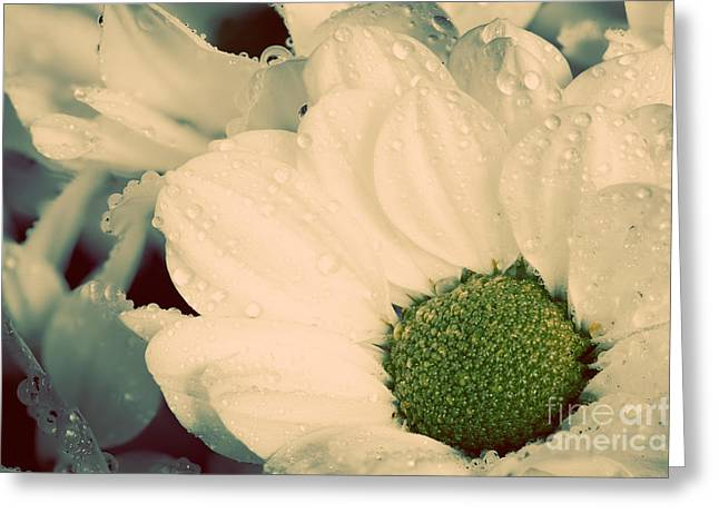 Cards Vintage Greeting Cards - Close up of young fresh flowers in spring Greeting Card by Michal Bednarek
