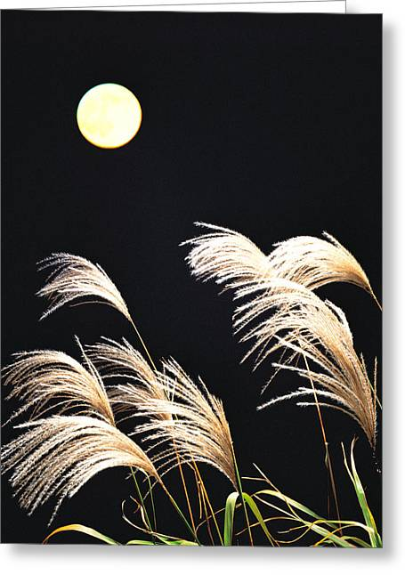 Close Up View Of Foxtail Grass Greeting Card by Panoramic Images