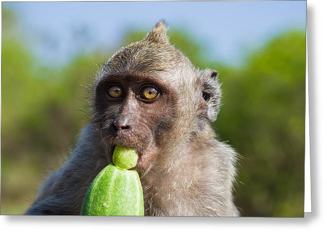 Surprise Greeting Cards - Closeup Monkey Eating Cucumber Greeting Card by Nila Newsom
