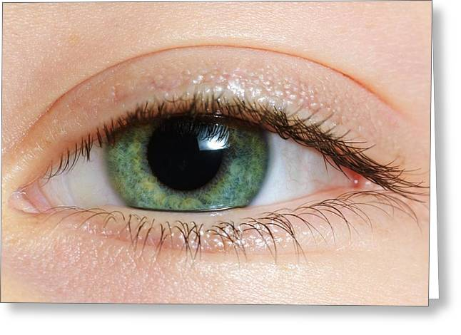 Caucasian Appearance Greeting Cards - Closeup Of A Green Eye Greeting Card by Ben Welsh