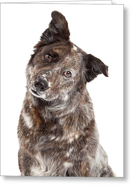 Obedient Greeting Cards - Closeup of Australian Shepherd Mix Breed Dog Greeting Card by Susan  Schmitz