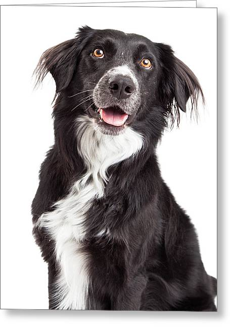 Border Photographs Greeting Cards - Closeup of Border Collie Mix Breed Dog Greeting Card by Susan  Schmitz