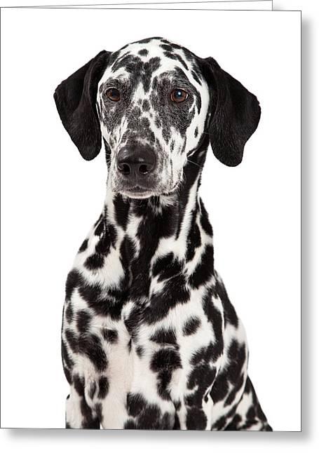 Animal Faces Greeting Cards - Closeup Of Dalmatian Dog Greeting Card by Susan  Schmitz