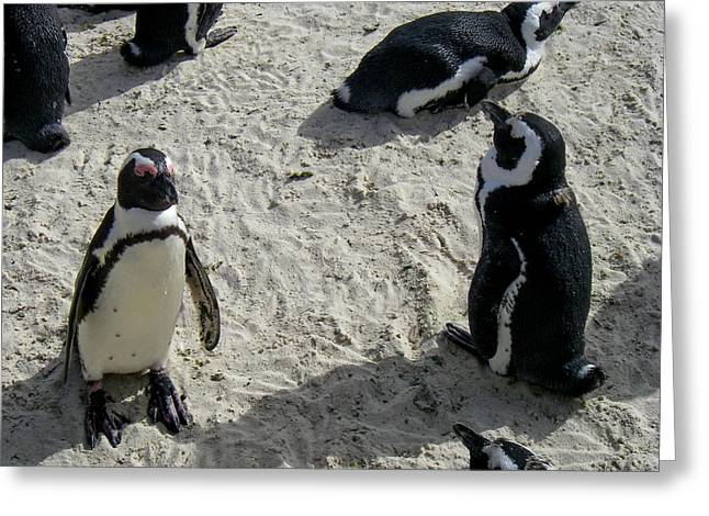 Geobob Greeting Cards - Closeup Penguins Simonstown South Africa Greeting Card by Robert Ford