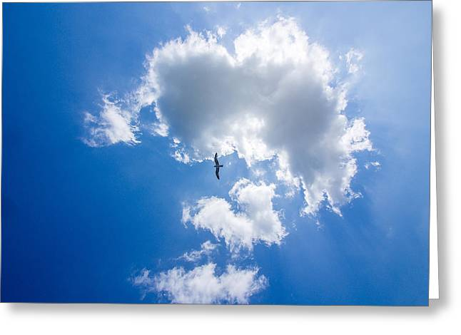 Inseln Greeting Cards - Cloud and seagull Greeting Card by Martin Liebermann