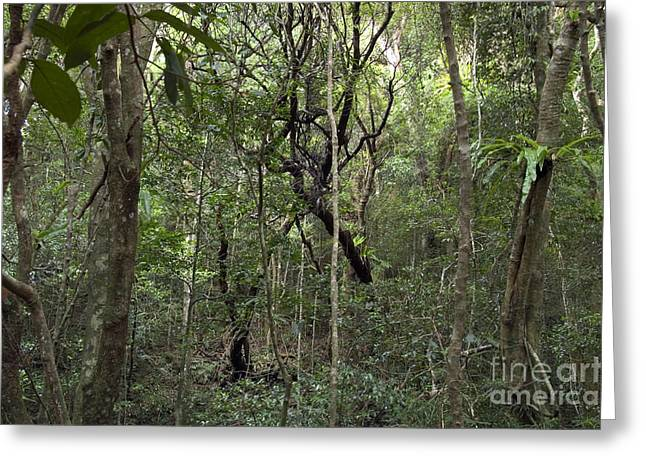 Biodiversity Greeting Cards - Cloud Forest In Northern Madagascar Greeting Card by Greg Dimijian