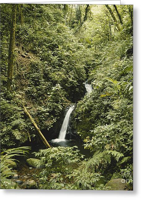 Verdant Greeting Cards - Cloud Forest Waterfall Greeting Card by Gregory G. Dimijian, M.D.