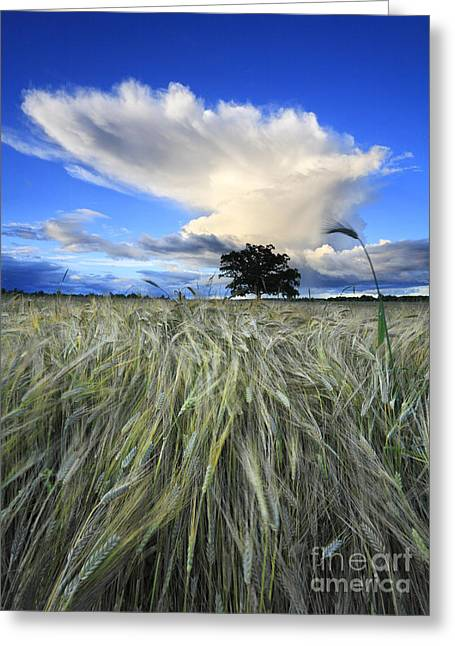 Wheat Field Sky Pictures Greeting Cards - Cloud Greeting Card by Nino Marcutti