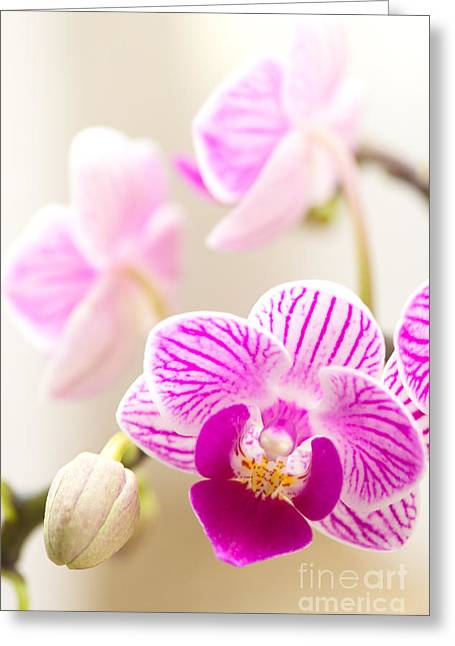 Dendrobium Greeting Cards - Cloud of Possibility Greeting Card by Ivy Ho