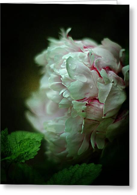 Balm Greeting Cards - Cloud Shrouded Beauty Greeting Card by Rebecca Sherman