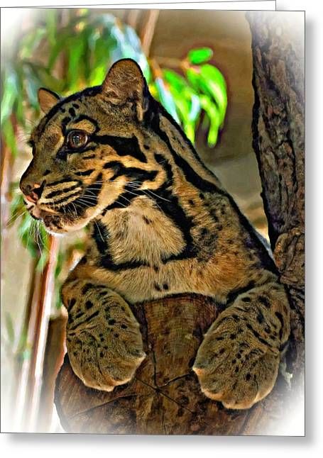 Cat Paw Print Greeting Cards - Clouded Leopard oil Greeting Card by Steve Harrington
