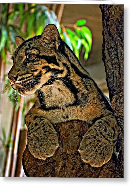 Cat Paw Print Greeting Cards - Clouded Leopard Greeting Card by Steve Harrington