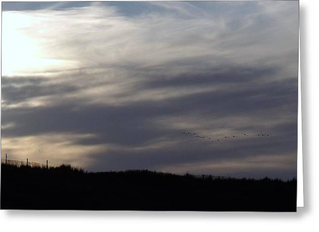 English Greeting Cards - Clouds and birds Greeting Card by Derek Knight