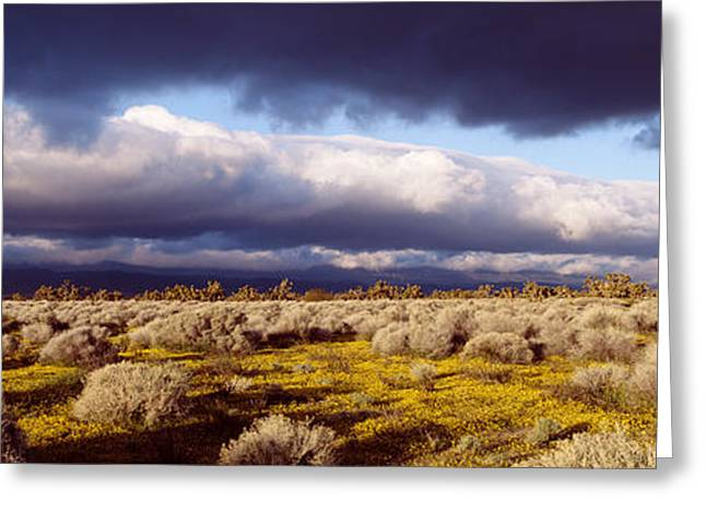 Thunderstorm Greeting Cards - Clouds, Mojave Desert, California, Usa Greeting Card by Panoramic Images