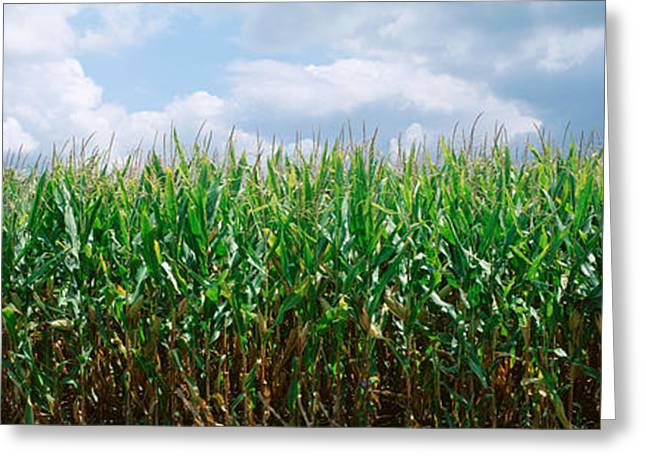 Field. Cloud Greeting Cards - Clouds Over A Corn Field, Christian Greeting Card by Panoramic Images