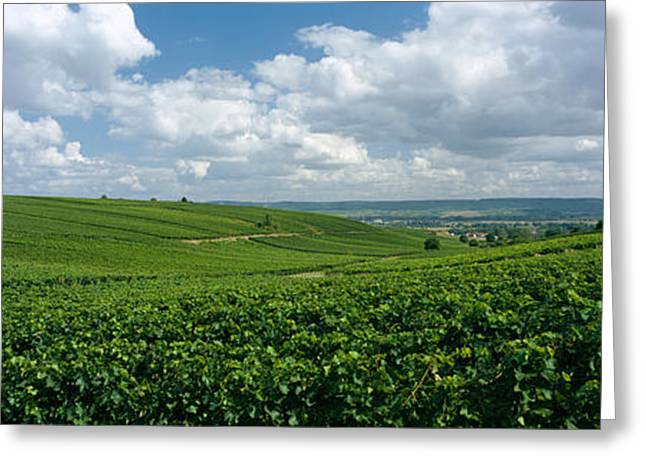 Vineyard Landscape Greeting Cards - Clouds Over Vineyards, Mainz Greeting Card by Panoramic Images
