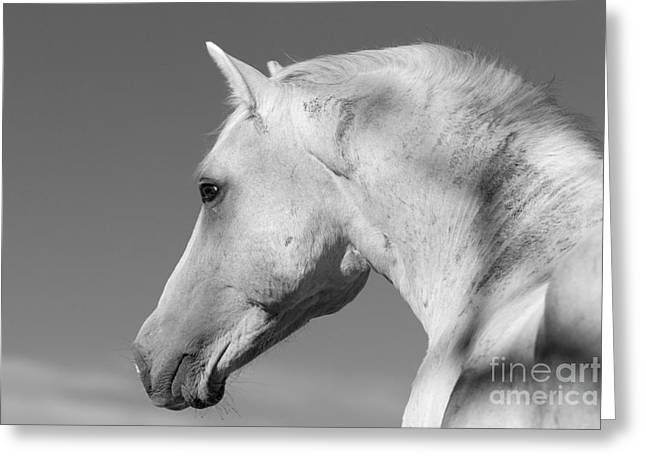 Wild Horses Greeting Cards - Clouds Perspective Greeting Card by Carol Walker