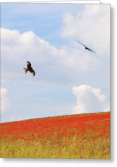 Red Kite Greeting Cards - Cloudscape Over Poppy Fields Greeting Card by Gill Billington