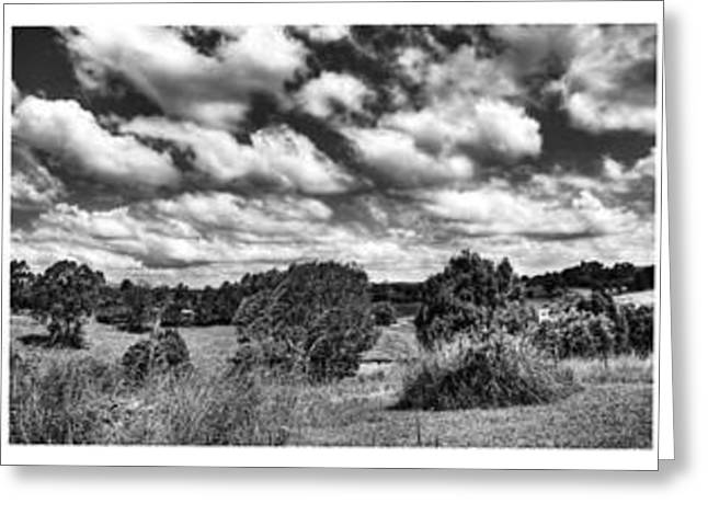 Fig Trees Greeting Cards - Cloudy Countryside Collage - Black and White Greeting Card by Kaye Menner