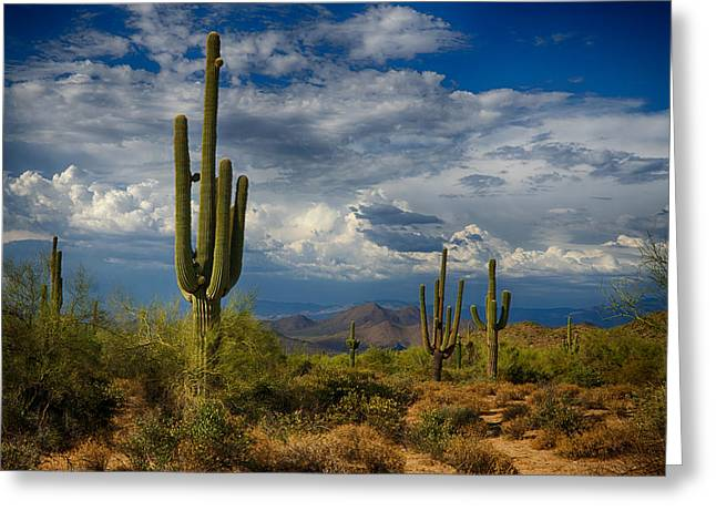 Monsoon Clouds Greeting Cards - Cloudy Desert Skies  Greeting Card by Saija  Lehtonen