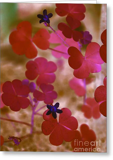 Corymbosa Greeting Cards - Clover - abstract Greeting Card by Claudia Mottram