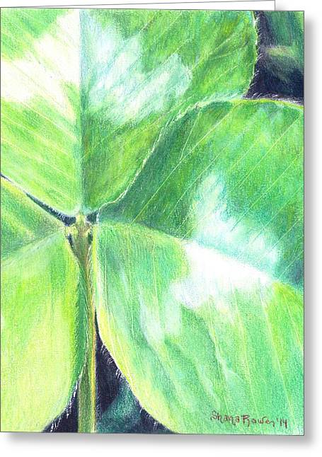 Veins Drawings Greeting Cards - Clover Closeup Greeting Card by Shana Rowe