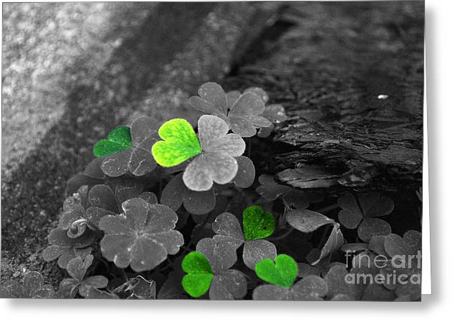 Patch Greeting Cards - Clover Hearts Greeting Card by David L Thomas