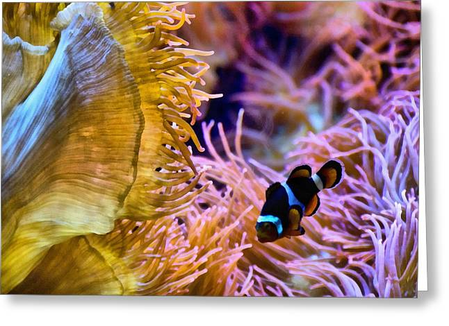 Clown Fish Photographs Greeting Cards - Clown Comfort Zone Greeting Card by Angelina Vick