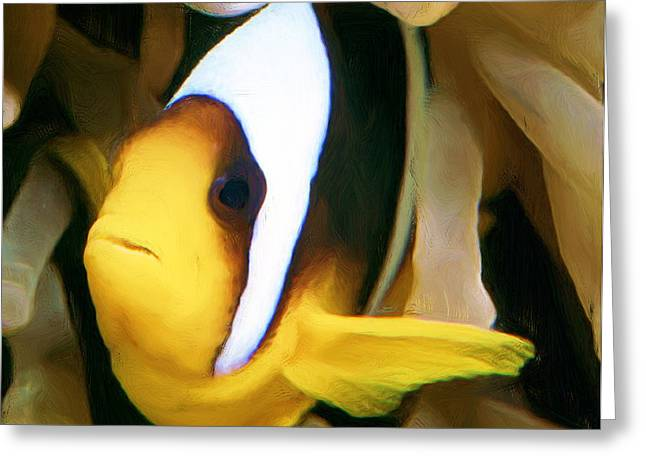 Undersea Photography Greeting Cards - Clown Fish 2 Greeting Card by Roy Pedersen