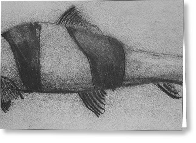Aquarium Fish Drawings Greeting Cards - Clown Loach Greeting Card by Faith Ohlinger