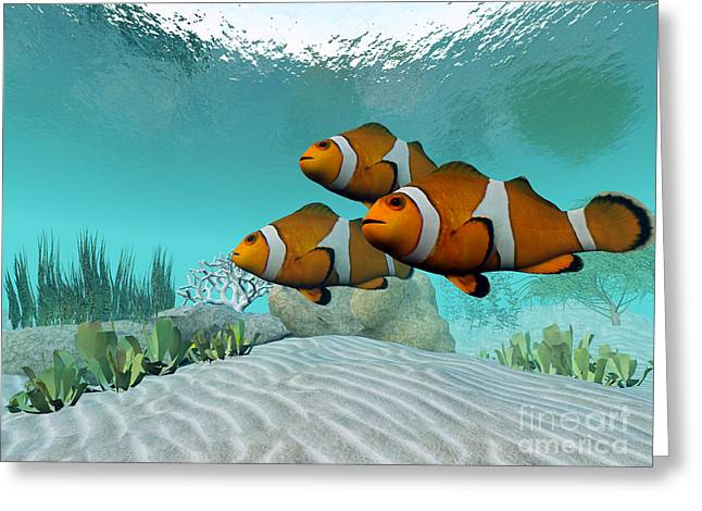 Yellowtail Greeting Cards - Clownfish Greeting Card by Corey Ford