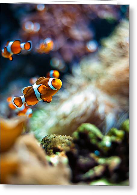 Anemonefish Greeting Cards - Clownfish  Greeting Card by Ulrich Schade