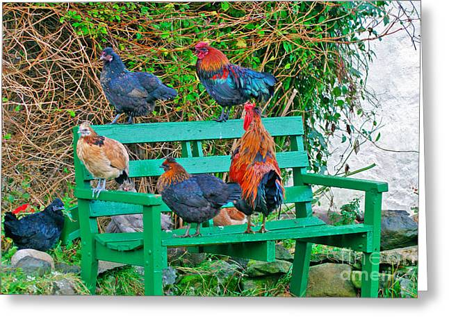 Free Range Hens Greeting Cards - Cluck Cluck Cluck Greeting Card by Lynne Sutherland