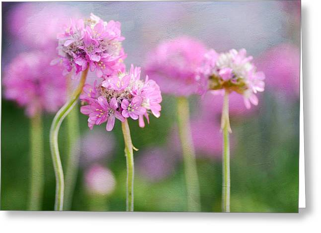 Pink Blossoms Greeting Cards - Cluster Greeting Card by Fraida Gutovich