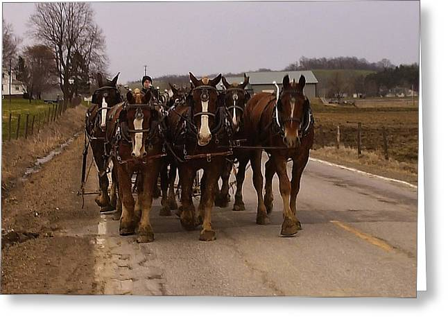 Pictures Of Horses Greeting Cards - Clydesdale Amish plow team Greeting Card by Chris Flees