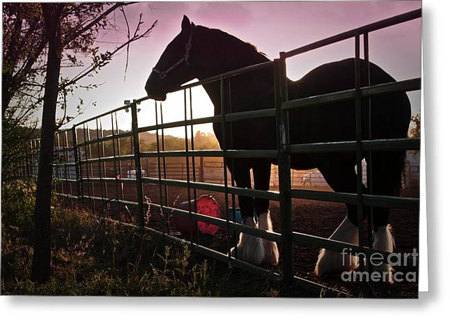 Clydesdale Dawn Greeting Card by Gus McCrea
