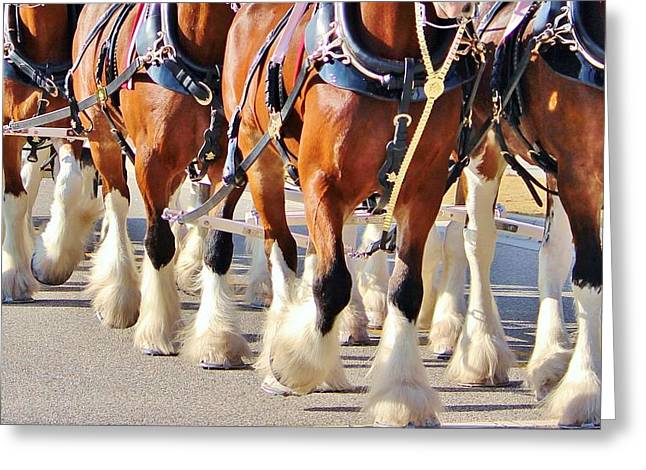 Clydesdale Horses Walking Greeting Card by Cynthia Guinn