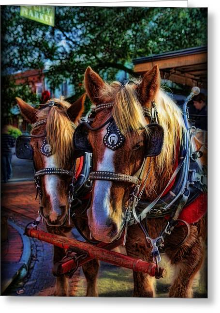 Equestrianism Greeting Cards - Clydesdales - Want a Ride Greeting Card by Lee Dos Santos