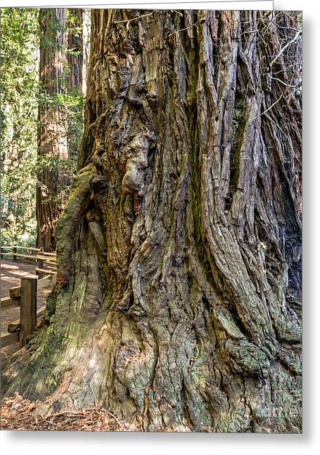Marin County Greeting Cards - Coast Redwood Greeting Card by Kate Brown